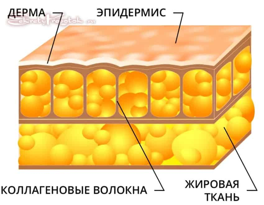 жировая ткань
